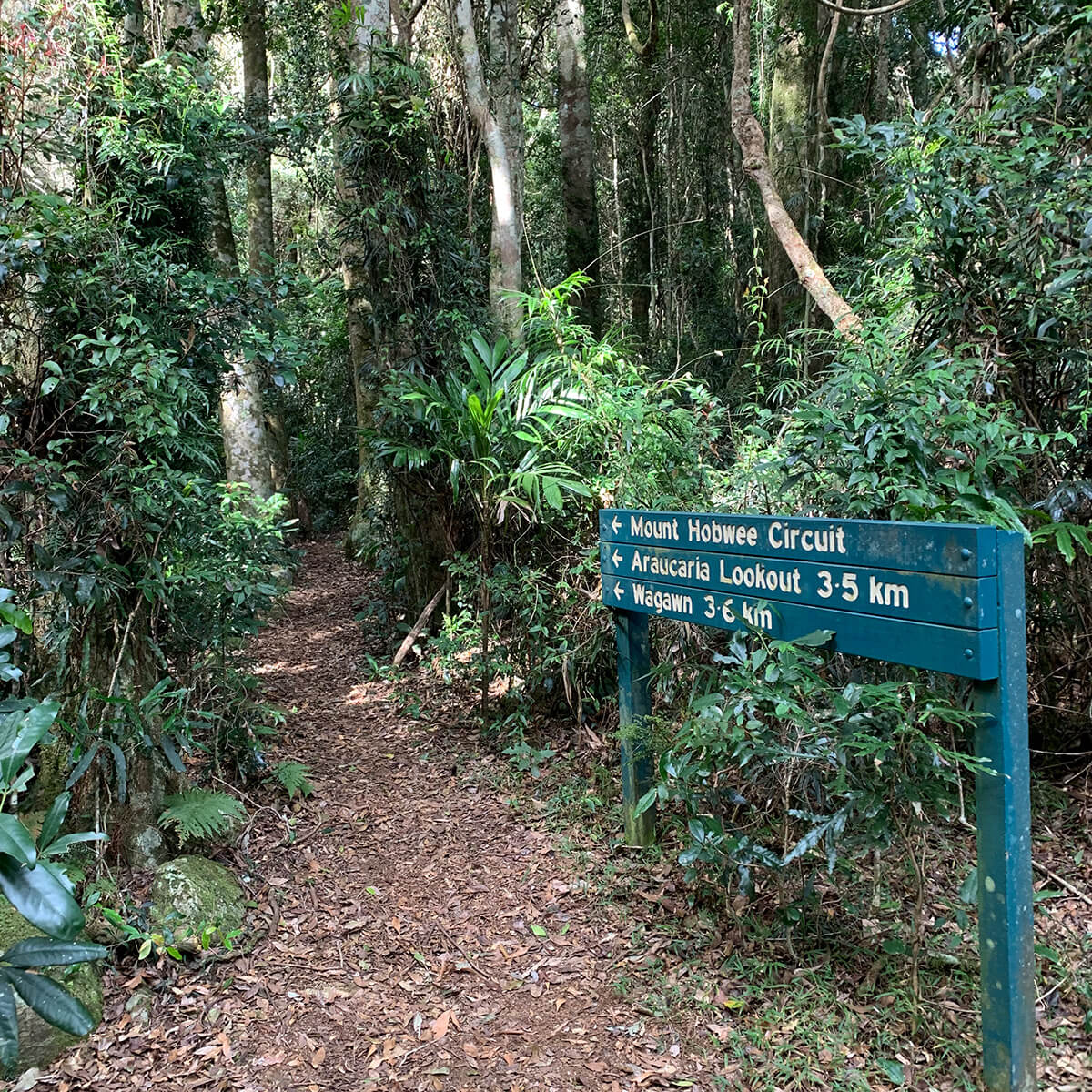 Bushwalking Lamington National Park